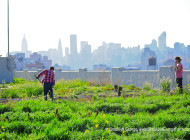 NYC Food Based Community Organization Spotlight: Brooklyn Grange