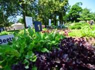 Visit a Farm this Summer (Battery Park City; Randall's Island; Glen Oaks, Queens)