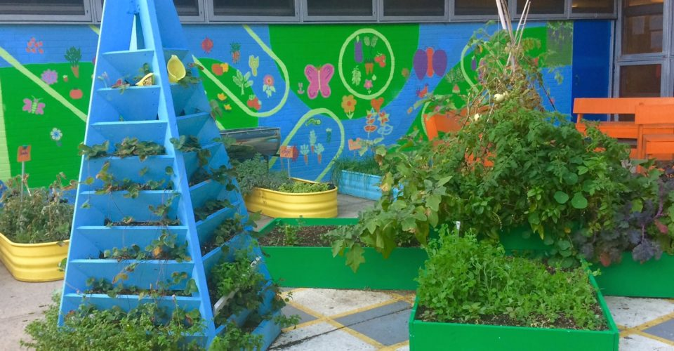 Are School Gardens Here To Stay Nyc Food Policy
