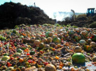 Down the Rabbit Hole: Why Measuring Food Waste Is So Confusing