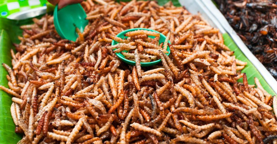 Buy edible bugs uk
