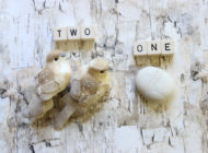 Two Birds, One Stone: NYC Food Based Community Organization Spotlight