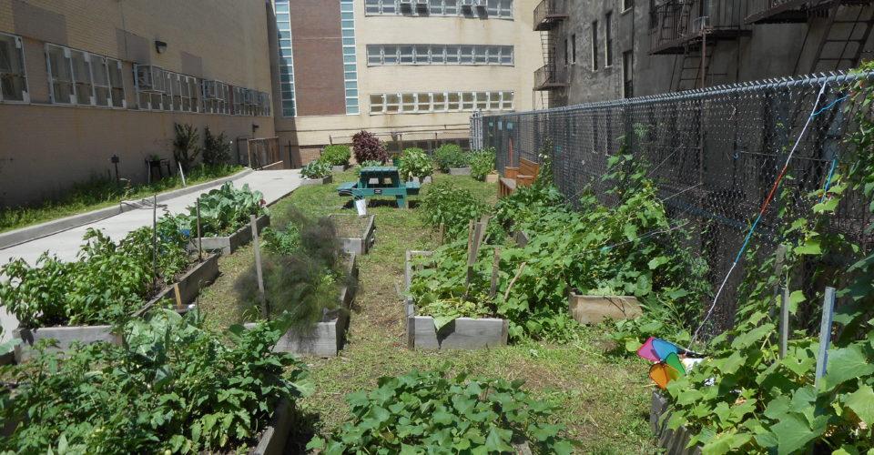 NYC School Gardens in Every Borough: Bronx - NYC Food Policy ...