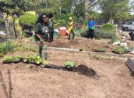 Hattie Carthan Community Farmers' Market: NYC Food Based Community Organization Spotlight
