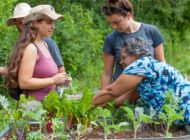 GrowTO Urban Agriculture Action Plan, Toronto: Urban Food Policy Snapshot