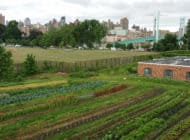 Project EATS: NYC Food Based Community Organization Spotlight