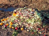 Australia Sets up a National Food Waste Strategy to Battle an Insidious Issue