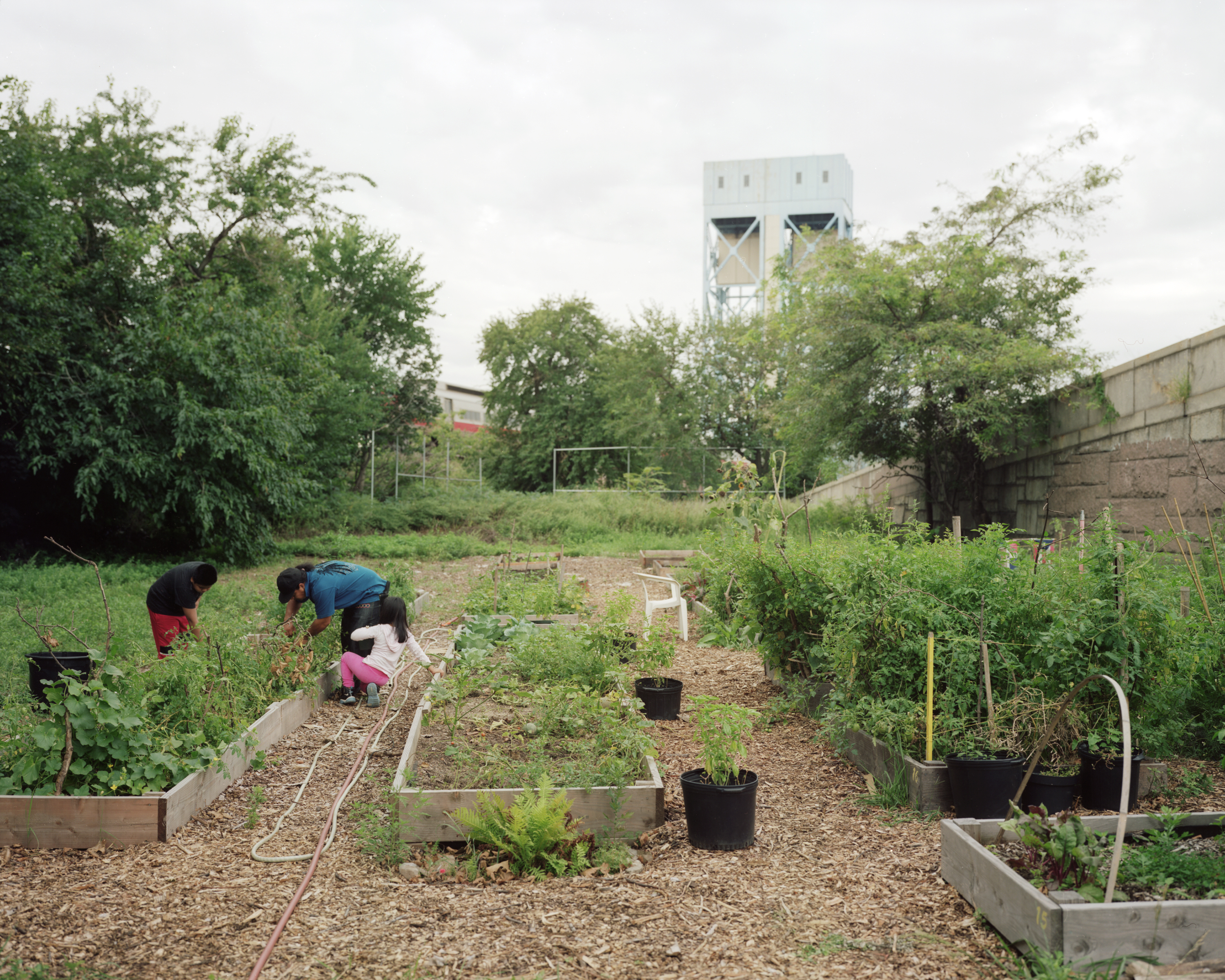 Are School Gardens Here to Stay? - NYC Food Policy CenterNYC Food ...
