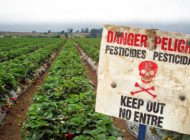 Hawaii Becomes the First U.S. State to Ban the Use of Pesticide, Chlorpyrifos
