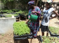 Micro Gardens, Senegal: Urban Food Policy Snapshot