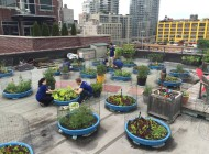 Visit a Farm This Summer: Hells Kitchen Farm Project; NYCHA Farm; Seeds to Feed Rooftop Farm