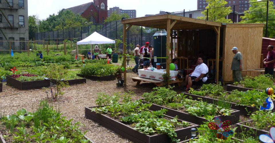 GreenThumb: NYC Food Based Community Organization Spotlight - NYC