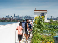 City Growers: NYC Food Based Community Organization Spotlight