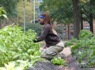 NYC Public Housing (NYCHA) Farms – A Twist on Urban Agriculture