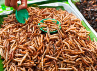 Bugs Feeding the World: 12 Companies Selling Edible Insects