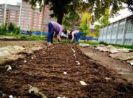 The Youth Farm: NYC Food Based Community Organization Spotlight