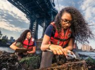 Billion Oyster Project Is Working to Restore NY Harbor's Marine Ecosystem