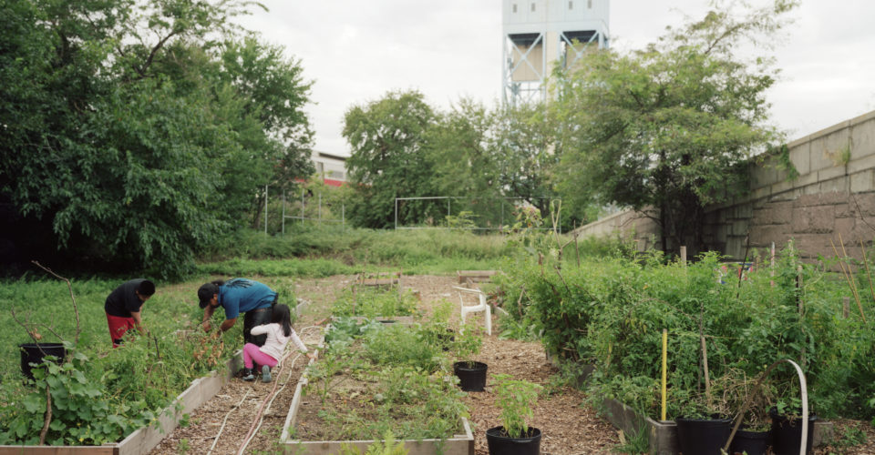 The Politics of NYC's Urban Farming: The City Notices Urban