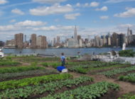 Brooklyn Rooftop Brings Organic Produce to the Community