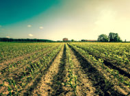 The 2018 Farm Bill, Part Four: Refinancing the Rural Community, Reinvigorating Growth