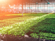The 2018 Farm Bill, Part Six: Horticulture and Specialty Crops