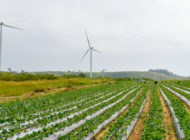 The 2018 Farm Bill, Part Five: Energy Initiatives for Sustainable Agriculture