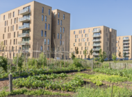 Using Urban Farming to Improve Wellness: Services for the UnderServed