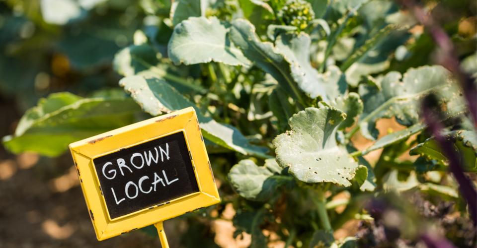 Nurturing a Communal Space for Urban Farming: Los