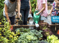 Supporting School Gardens and Healthy Food Choices: Garden to Cafe NYC