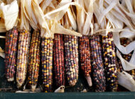 Celebrating Native American Heritage Month: 9 Ways to Learn About Indigenous Food Systems