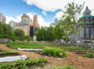 15 Urban Farms and Gardens Bringing Fresh Produce and Food Education to New Yorkers